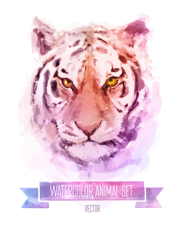 Grupo do vetor de ilustrações da aquarela Tigre bonito