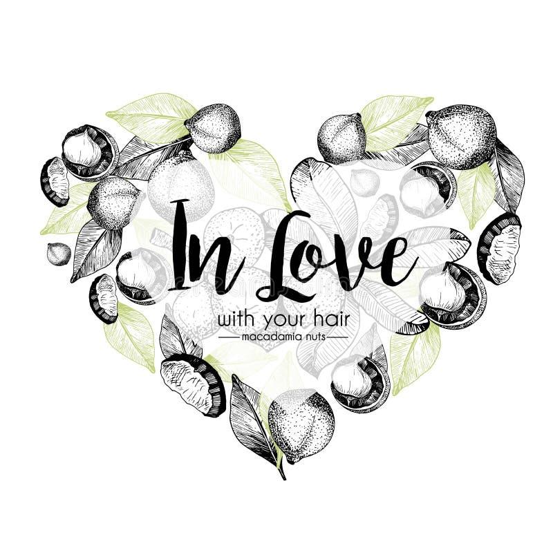 Grupo do vetor de ingredientes dos cuidados capilares Mão orgânica elementos tirados Molde da forma do coração com macadâmia ilustração royalty free