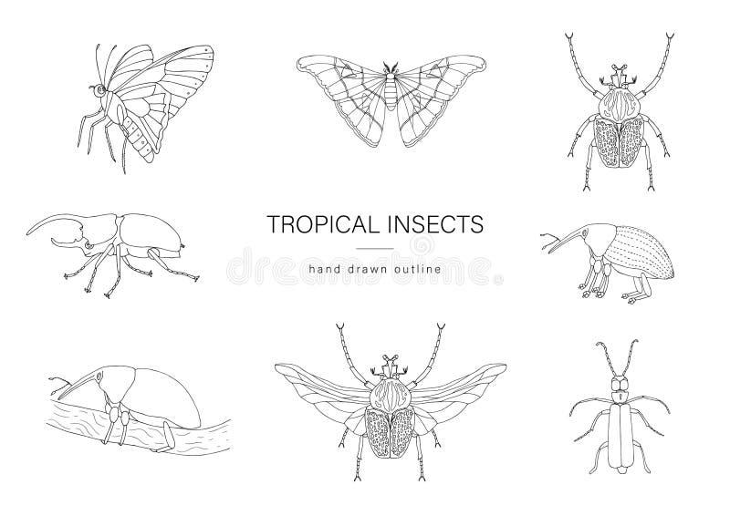 Grupo do vetor de insetos tropicais ilustração do vetor