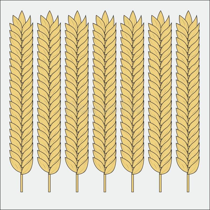 Grupo do vetor de orelhas do trigo Esbo?o do cereal para a padaria e o outro projeto ilustração stock