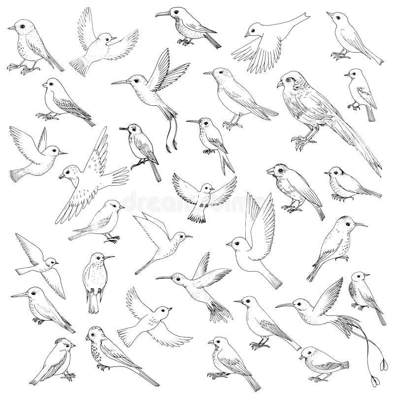 Grupo do vetor de pássaros ilustração do vetor