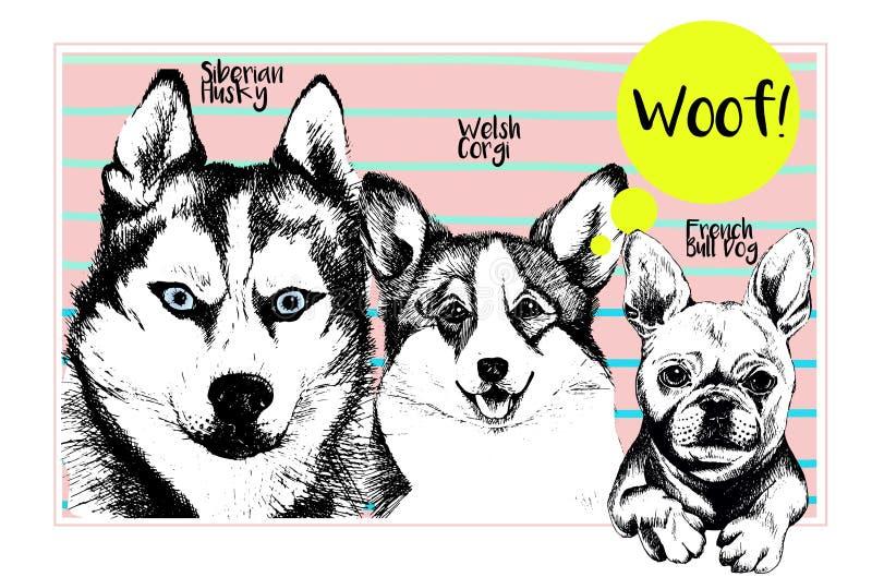 Grupo do vetor de retratos do cão Cão de puxar trenós Siberian, pembroke do corgi de galês, buldogue francês Ilustração tirada mã ilustração do vetor
