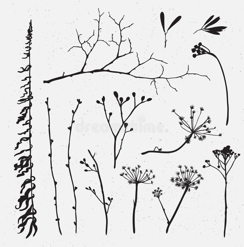 Grupo do vetor de silhuetas das flores e da grama no fundo ilustração stock