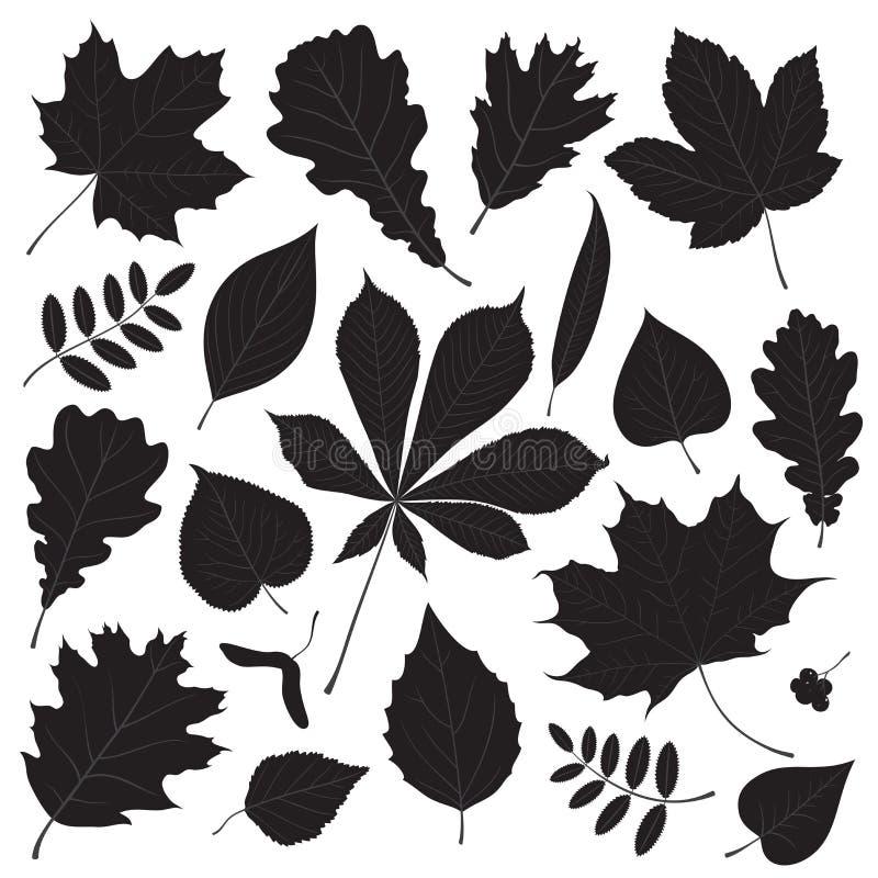Grupo do vetor de silhuetas isoladas diferentes da folha da árvore ilustração royalty free