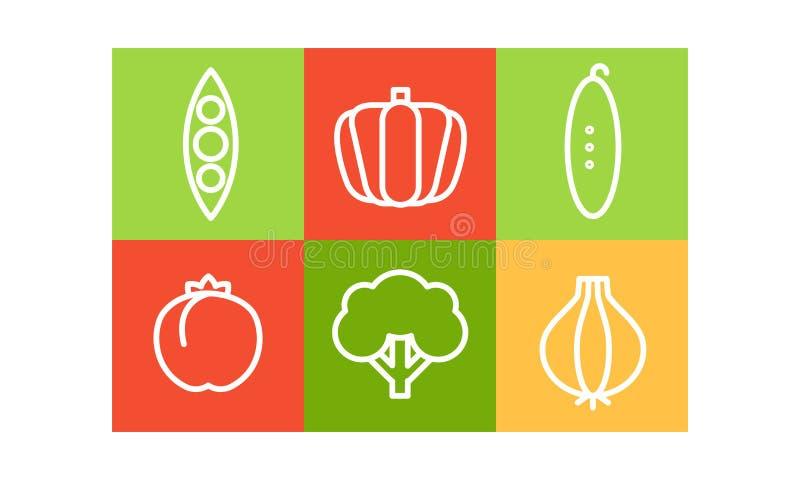 Grupo do vetor de vegetais no estilo linear em quadrados coloridos Produtos agrícolas naturais Alimento orgânico e saudável ilustração do vetor
