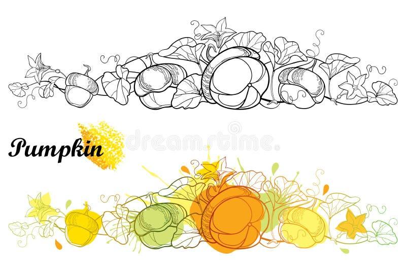 Grupo do vetor de videira horizontal da abóbora do esboço com flor, folha ornamentado isolada no fundo branco Beira da abóbora do ilustração do vetor