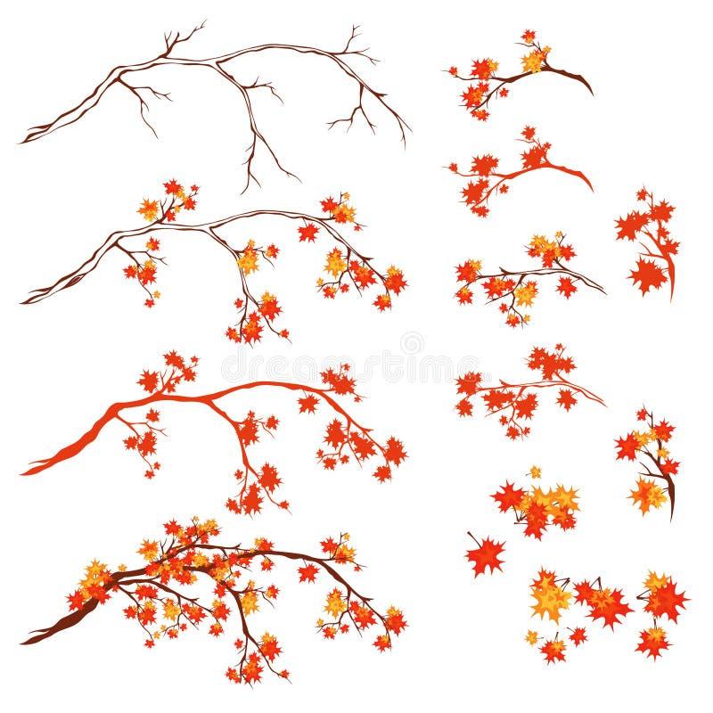 Grupo do vetor dos brances da árvore de bordo do outono ilustração royalty free
