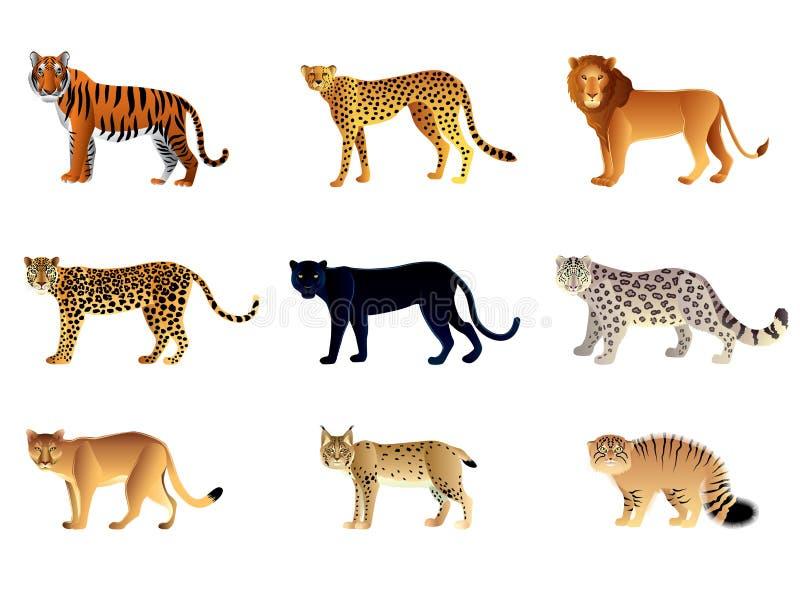 Grupo do vetor dos gatos grandes ilustração do vetor