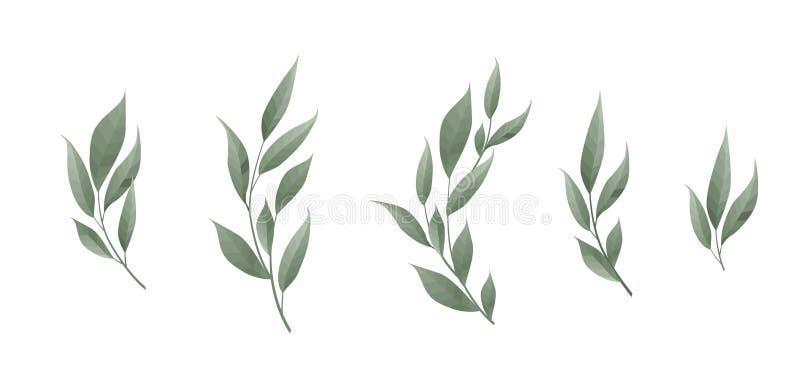 Grupo do vetor Folha de louro Folhas do verde no fundo branco Ilustração do vetor ilustração do vetor