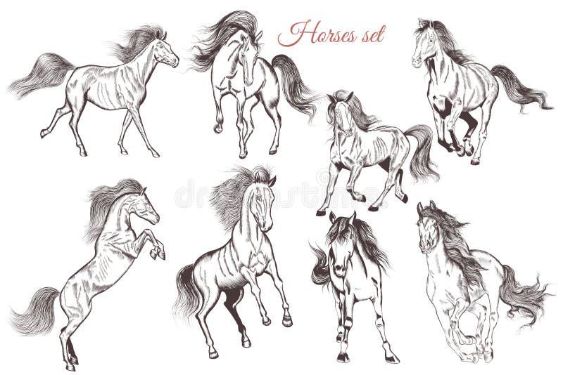 Grupo do vetor mão detalhada de cavalos tirados para o projeto ilustração do vetor