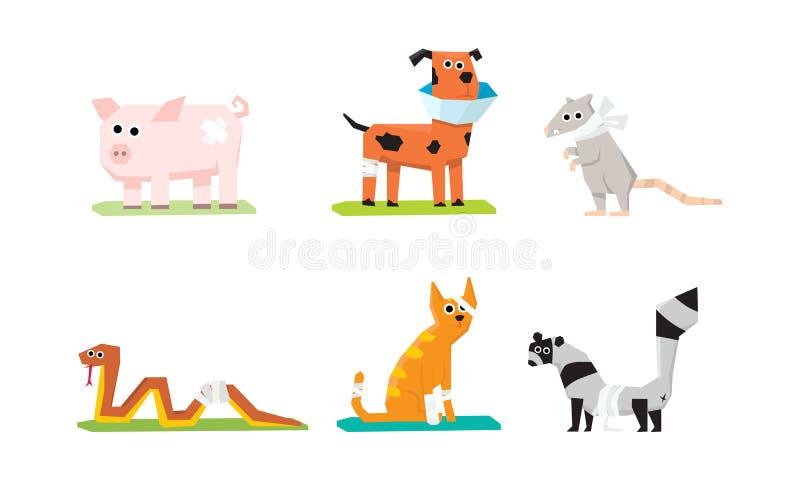 Grupo doente e ferido dos animais, cuidado veterinário, porco, rato, gato, serpente, cão, guaxinim com emplastros e vetor das ata ilustração royalty free