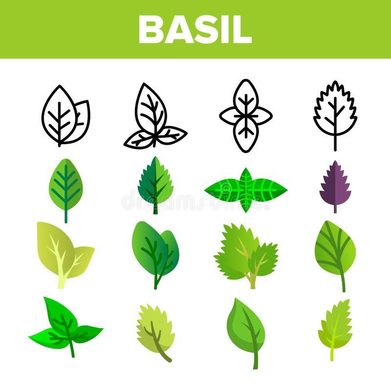 Grupo dos ícones de Basil Leaves Vetora Thin Line ilustração do vetor