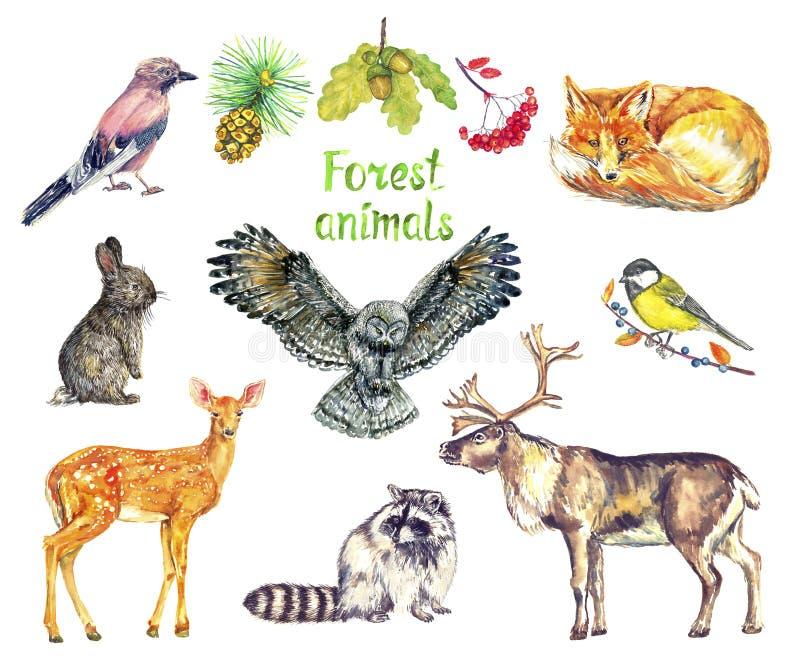 Grupo dos animais da floresta, gaio euro-asiático, raposa vermelha, coelho da lebre, coruja, grande melharuco no galho, hemionus  ilustração royalty free