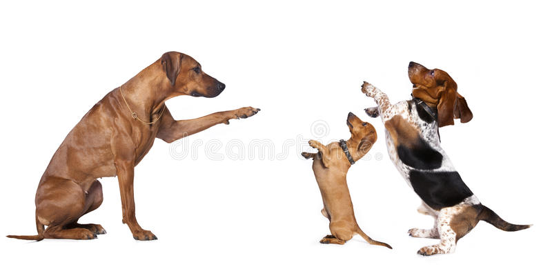 Grupo dos cães fotos de stock royalty free