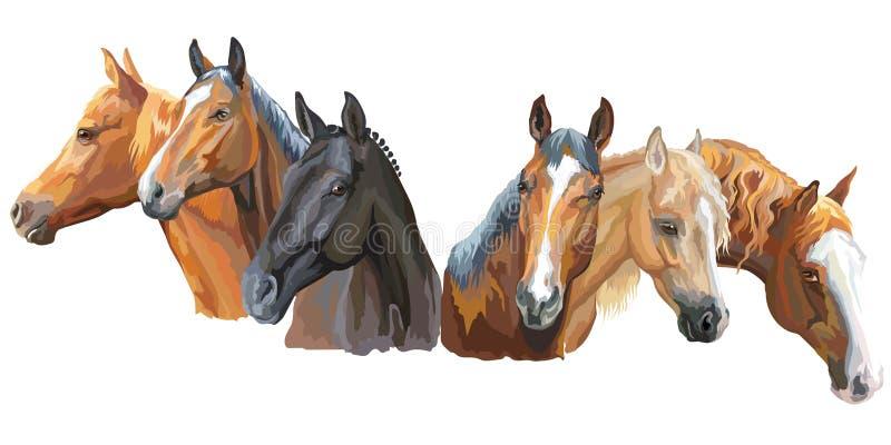 Grupo dos cavalos breeds2 ilustração royalty free