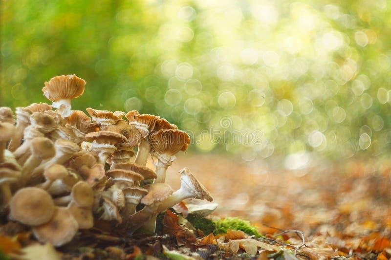Grupo dos cogumelos foto de stock