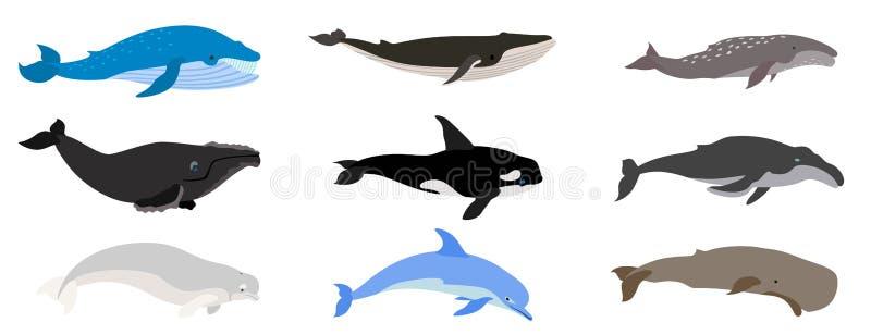 Grupo dos ?cones da baleia, estilo liso ilustração stock
