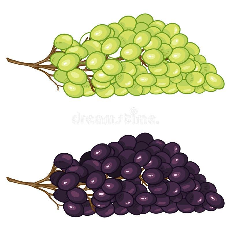 Grupo dos desenhos animados do vetor de uvas verdes e pretas ilustração royalty free
