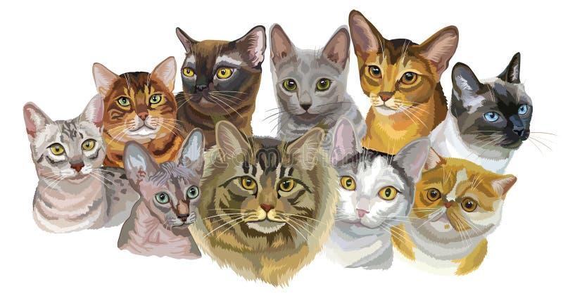 Grupo dos gatos breeds1 ilustração royalty free
