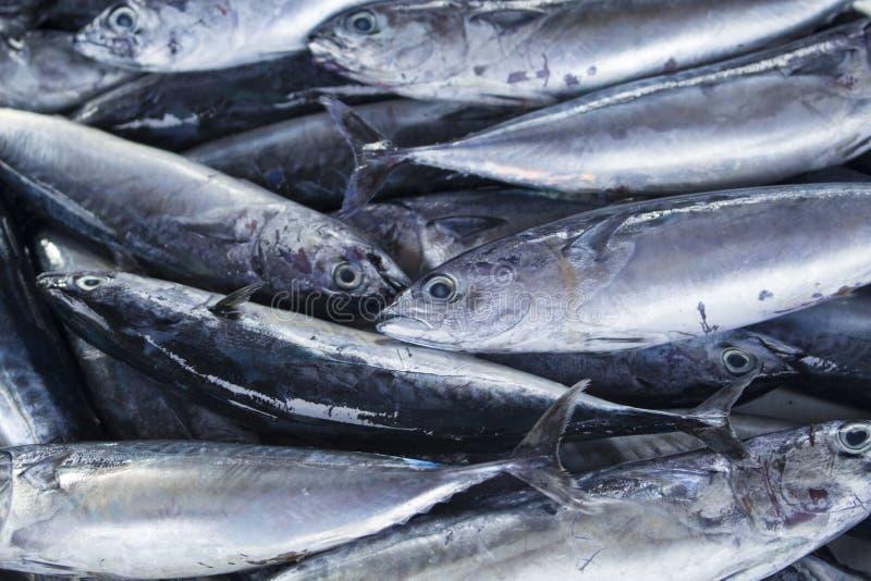 Grupo dos peixes Os peixes do mar empilham no mercado do marisco Peixes de mar frescos para a venda fotografia de stock royalty free