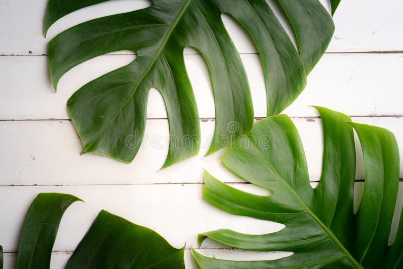 Grupo dos termas do produto da aromaterapia, composição lisa da configuração Le tropical foto de stock royalty free