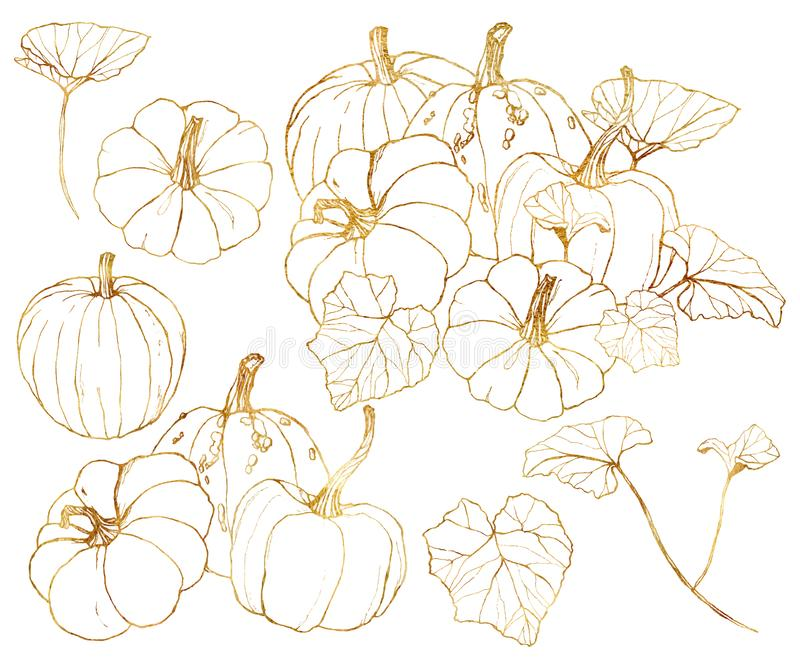 Grupo dourado das cabaças do vetor Abóboras pintados à mão com as folhas e os ramos isolados no fundo branco Festival da colheita ilustração do vetor