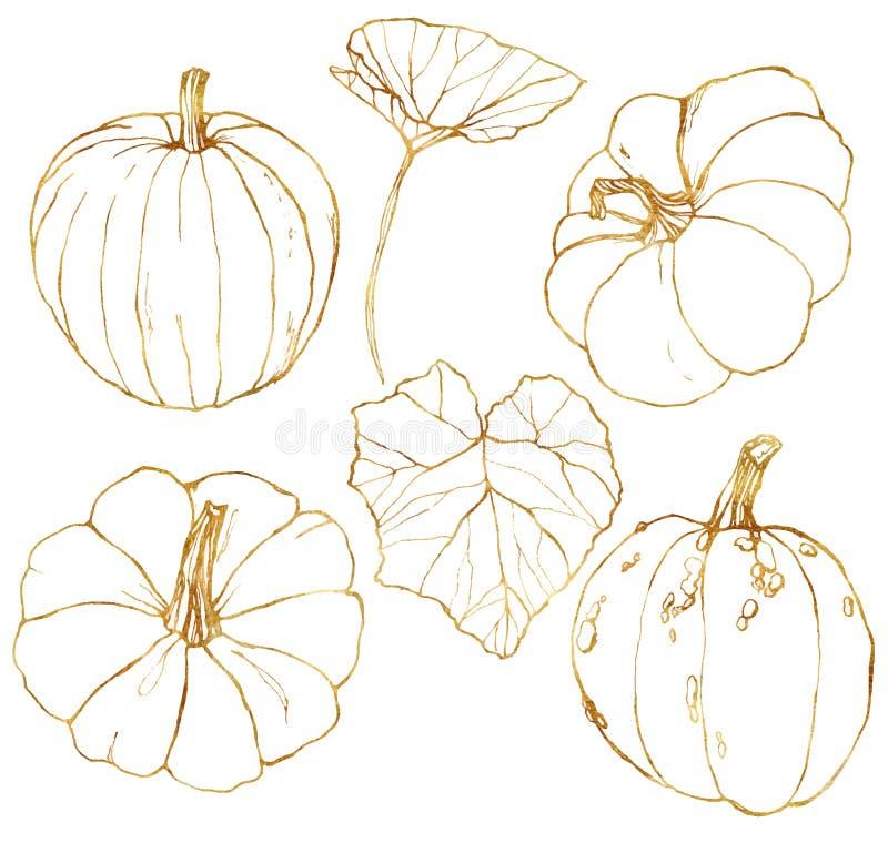 Grupo dourado do vetor com as abóboras tradicionais pintados à mão da colheita do outono com as folhas e os ramos isolados no bra ilustração do vetor