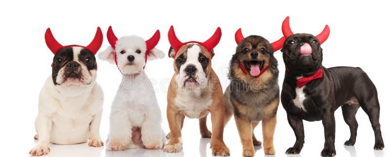 Grupo engraçado de cinco cães que vestem chifres do diabo vermelho imagem de stock royalty free