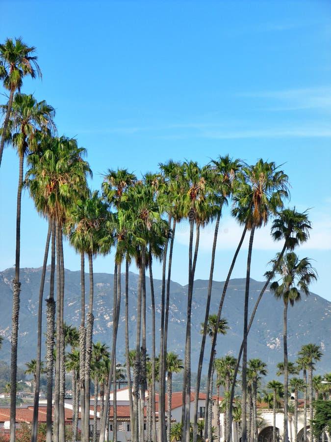 Grupo ensolarado da palma em Santa Barbara, Califórnia imagens de stock royalty free