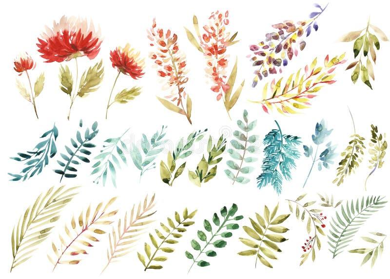 Grupo floral da aquarela Coleção floral roxa colorida com folhas e flores, aquarela de tiragem Floral colorido ilustração do vetor