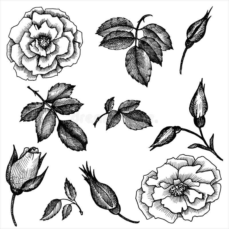 Grupo floral do vetor do vintage ilustração stock