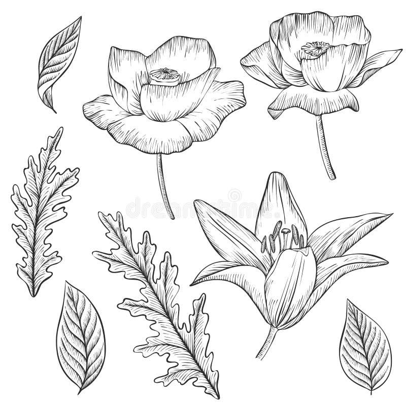 Grupo floral do vetor do vintage ilustração do vetor