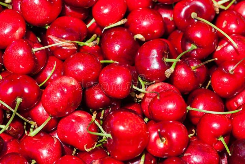 Grupo fresco de cerejas vermelhas imagem de stock