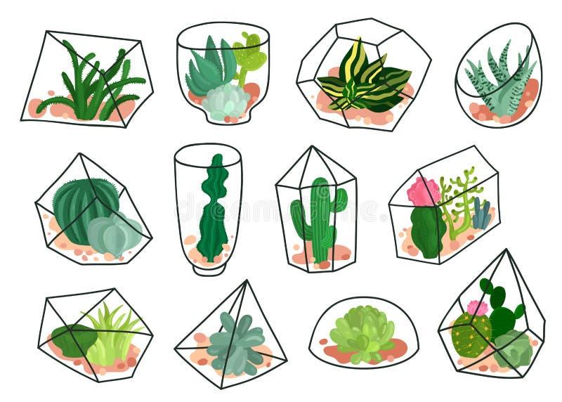 Grupo geométrico de Florariums das plantas carnudas dos cactos ilustração do vetor