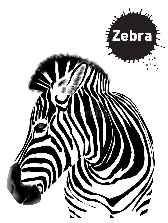 Grupo gr?fico de zebras, esbo?o do vintage para o projeto ilustração stock