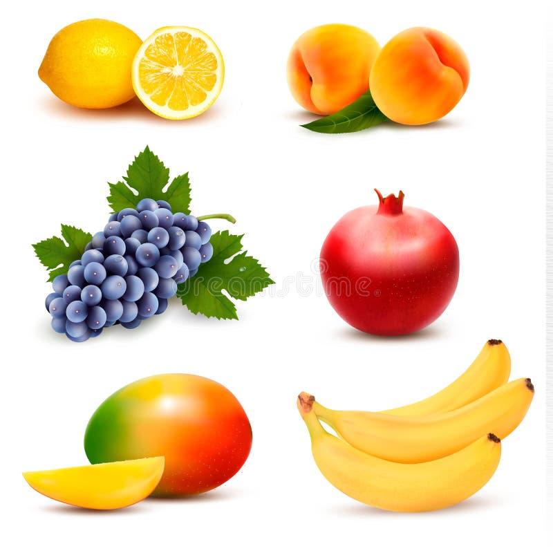 Grupo grande de diversa fruta stock de ilustración