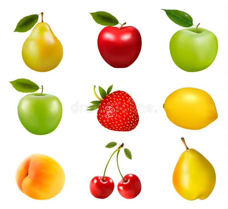 Grupo grande de diversa fruta ilustración del vector