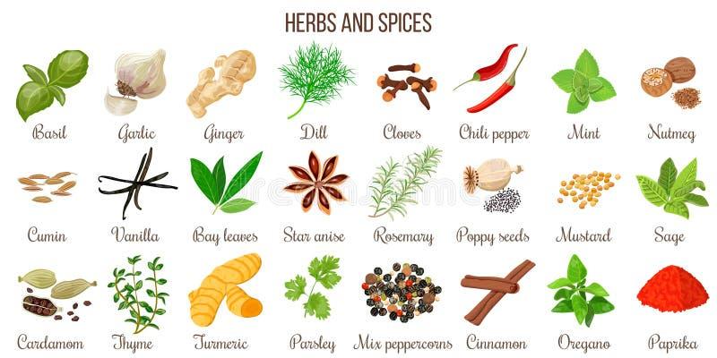 Grupo grande de ervas e de especiarias culinárias populares ilustração do vetor