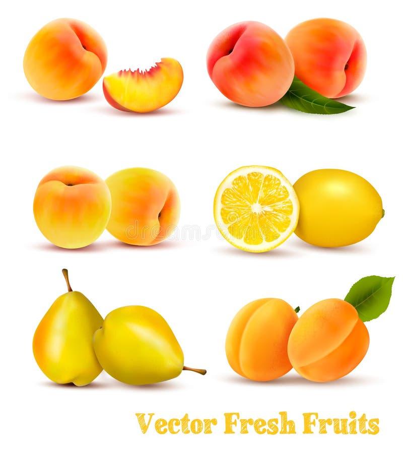 Grupo grande de frutas amarillas y anaranjadas ilustración del vector