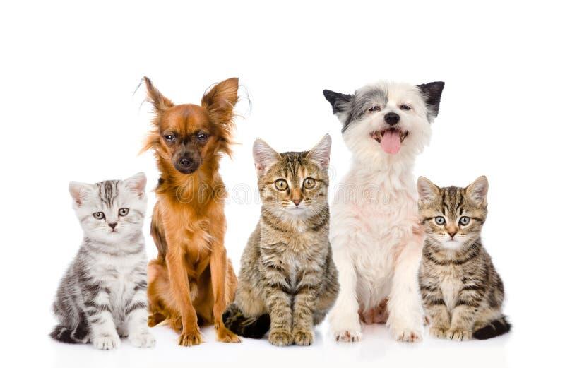 Grupo grande de gatos y de perros que se sientan en frente Aislado en blanco foto de archivo libre de regalías