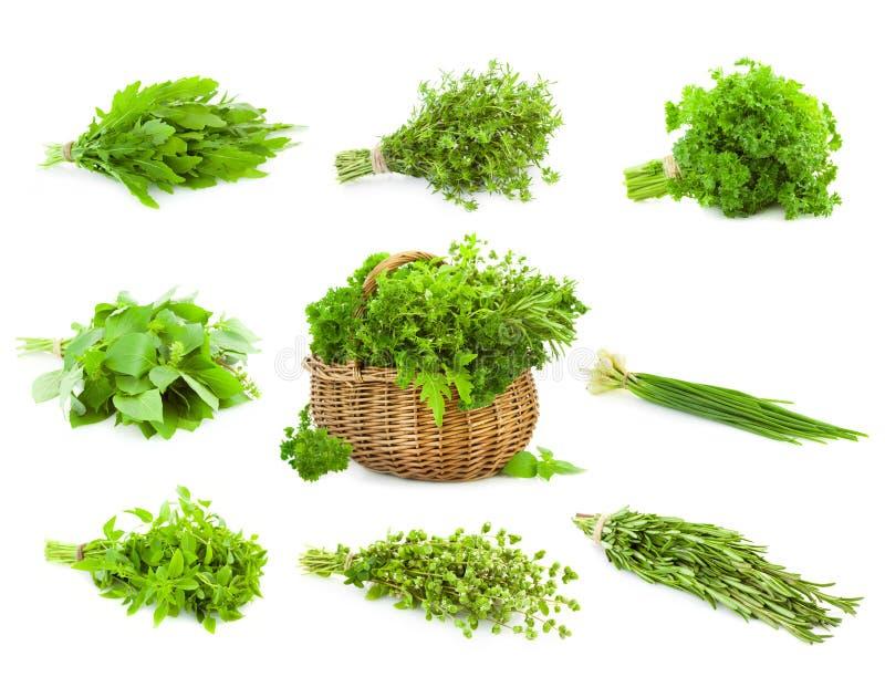 Grupo grande de grupos e cesta das ervas frescas da especiaria/isoladas fotos de stock royalty free