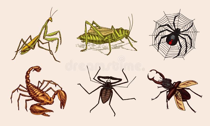 Grupo grande de insetos Animais de estimação do vintage na casa Caracol do escorpião dos besouros dos erros, Whip Spider, locustí ilustração stock