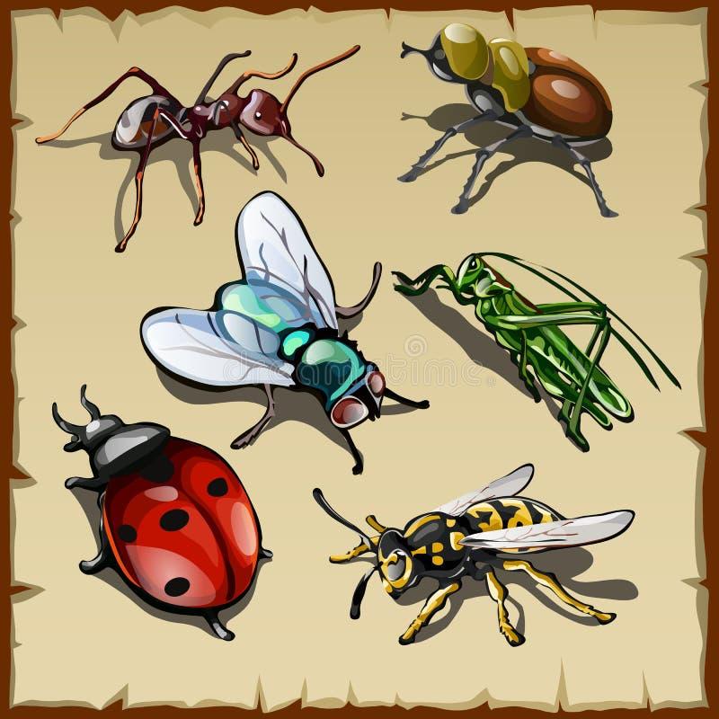 Grupo grande de insetos diferentes, seis variedades do vetor ilustração do vetor