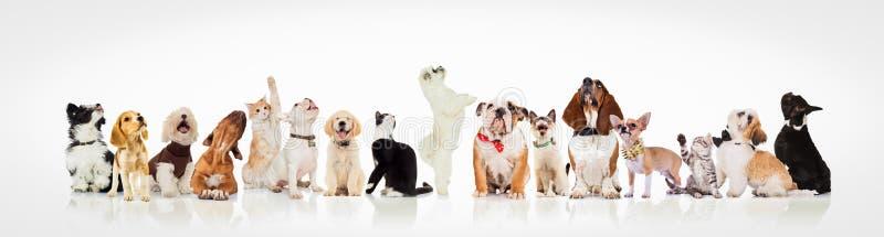 Grupo grande de perros curiosos y de gatos que miran para arriba imagen de archivo