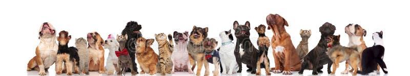 Grupo grande de perros mezclados y de gatos que miran para arriba fotos de archivo libres de regalías
