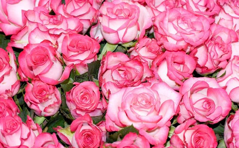 Grupo grande de rosas cor-de-rosa múltiplas de uma noiva fotos de stock royalty free