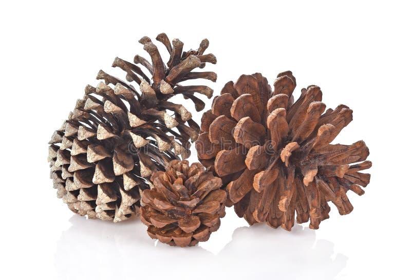 Grupo grande de várias árvores coníferas dos cones isoladas na parte traseira do branco fotografia de stock