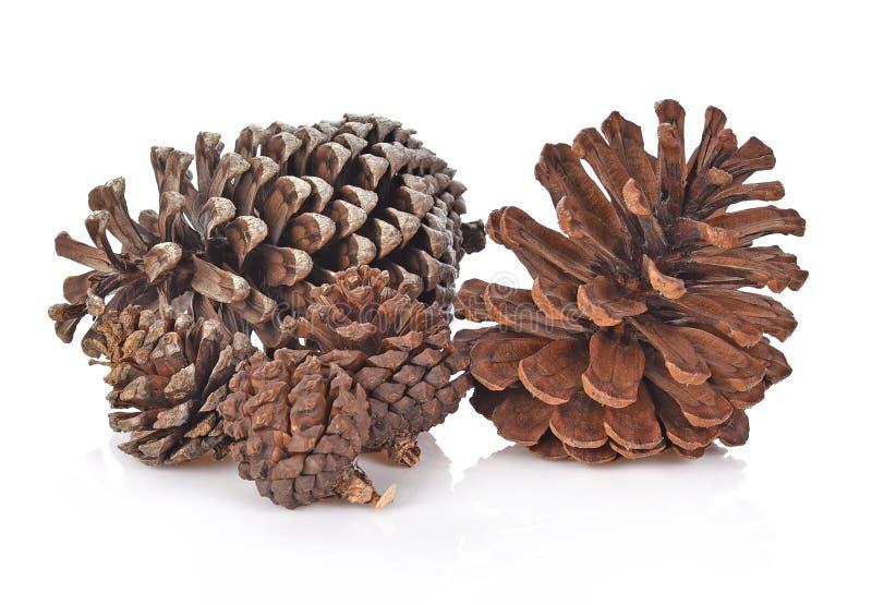 Grupo grande de várias árvores coníferas dos cones isoladas na parte traseira do branco foto de stock