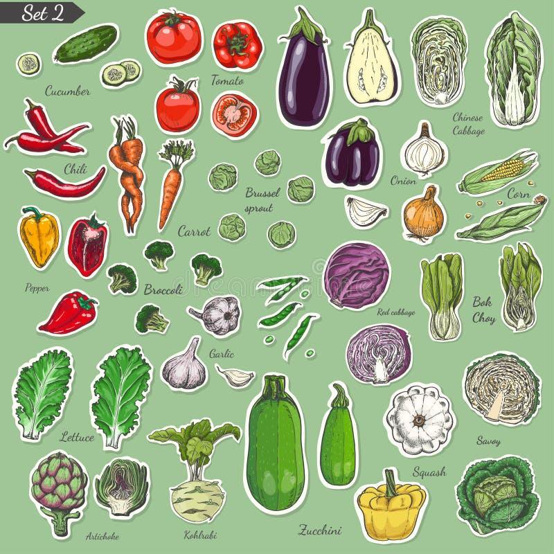 Grupo grande de vegetais coloridos da etiqueta ilustração royalty free
