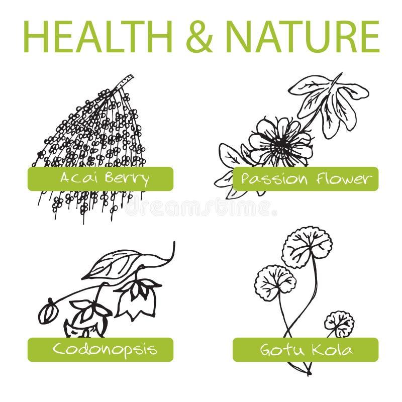 Grupo Handdrawn - saúde e natureza Coleção de ilustração stock